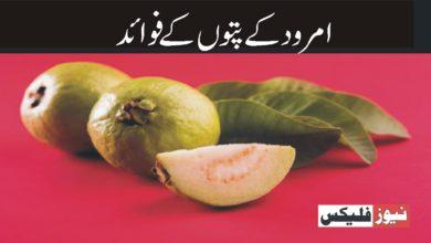 امرود کے پتوں کے فائدے