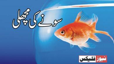 سونے کی مچھلی