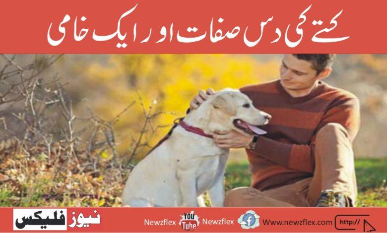 کتے کی دس صفات اور ایک خامی