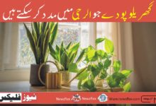 Houseplants That Can Help With Allergies