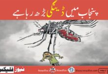 Dengue on the rise in Punjab