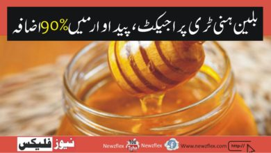 PM Imran Khan to announce Rs. 2 billion honey project that will boost production by 90% in two years